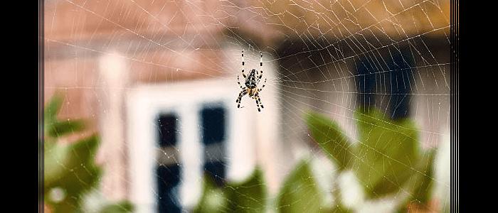 Spider Control Ringwood